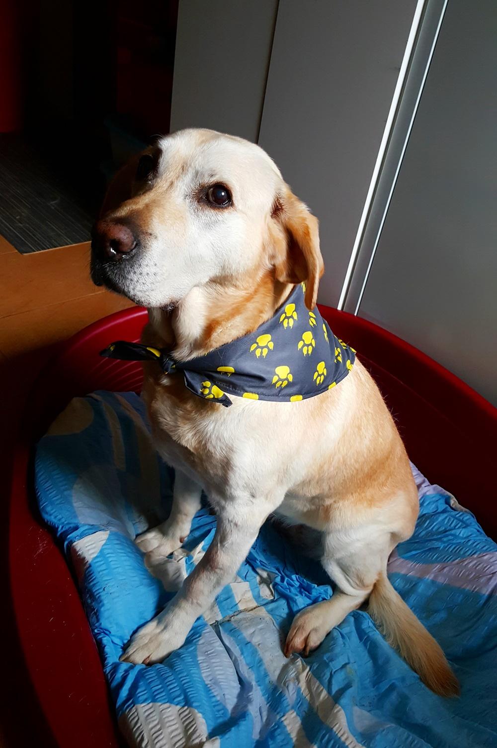 Výroba šátků pro psy s reklamním potiskem loga. Psí reklamní šátky ... 8645bd140c